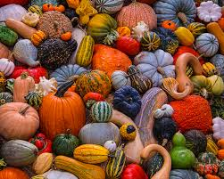 Family Day on Aragon--Fall Harvest with the Coral Gables Museum @ Coral Gables Museum  | Coral Gables | Florida | United States