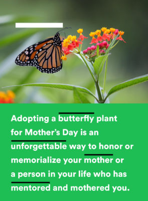 This Mother's Day: Give the Gift of Nature @ The Underline